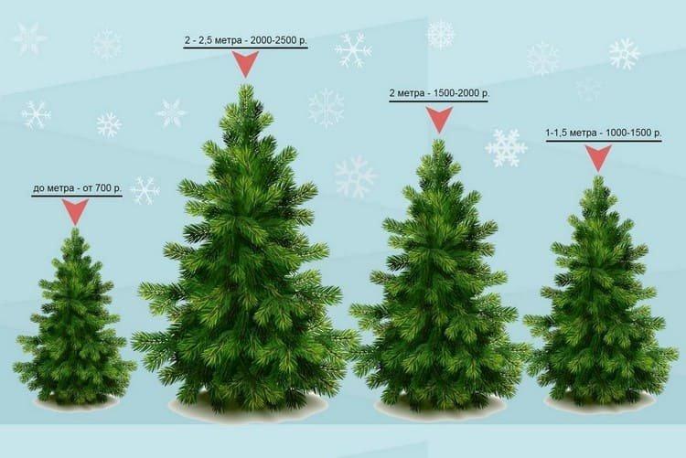 Размер елки