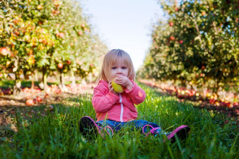 Когда Яблочный Спас в 2021🍏 обряды и приметы